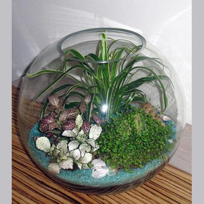 Как сделать сад в аквариуме